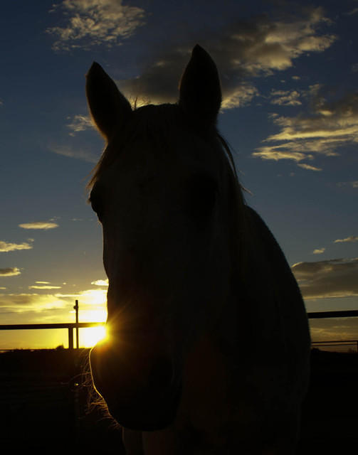 A White Horse at Sunset
