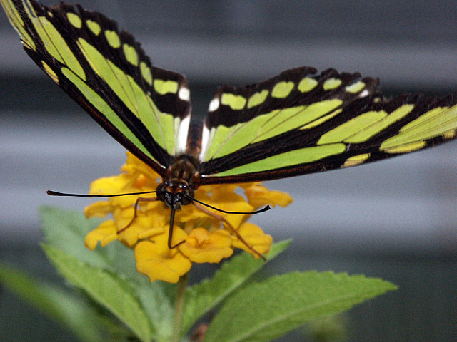A Black and Yellow Butterfly Sitting on a Flower