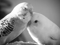 Parkeets - Black and White