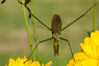 Green Praying Mantis Perched on a Yellow Flower