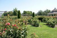 The Julia Davis Park - Rose Garden