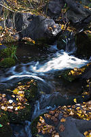 Stream With Autumn Leaves - Idaho