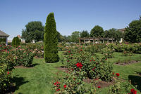 Julia Davis Rose Garden in Boise, Idaho